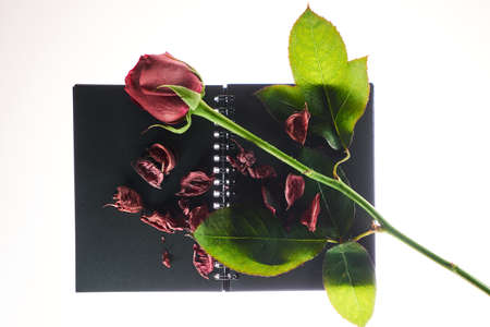 A red rose and dry roses petals on a black book. Valentines concept. Stok Fotoğraf