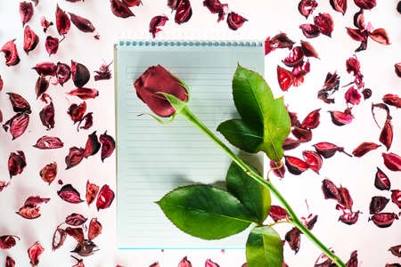 Valentines day background with a blank notepad, a stalk of red rose and rose petals Stok Fotoğraf