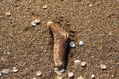 Small tree trunk on the beach sand