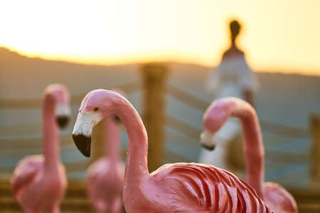 red model flamingos and sunset