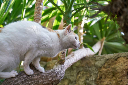 a white cute cat playing