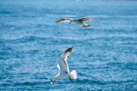 Beautiful seagull flying in the air