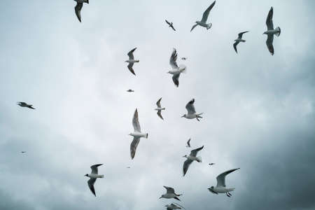 Seagulls flying in the sky Stock Photo