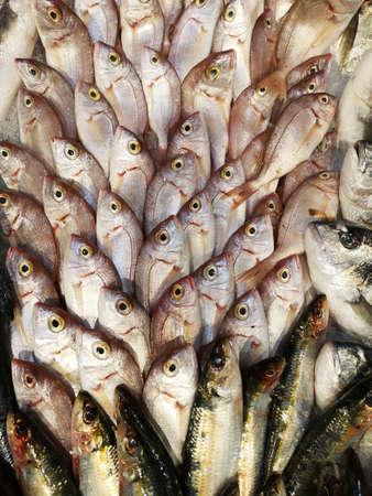 healthy fish at the market