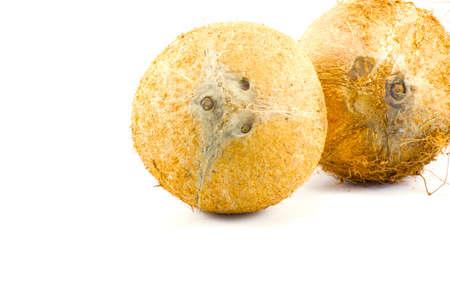 materia prima: Coco aislado en el fondo blanco para cocinar o materia prima o la grasa de los alimentos o de calor�as y grasa Foto de archivo