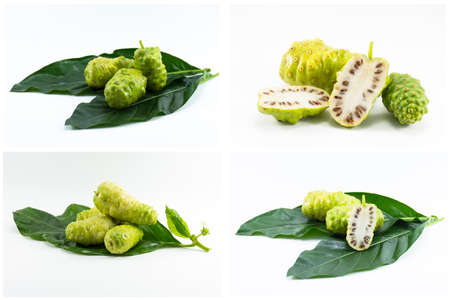 noni fruit: Set noni fruit isolated on white background.Fruit for health and herb for health. Stock Photo