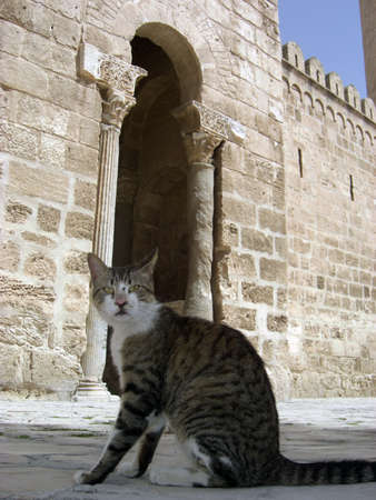 coran: Cat sat in front of the Medina in Sousse, Tunisia