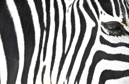 zebra face: Zebra Stripes Stock Photo