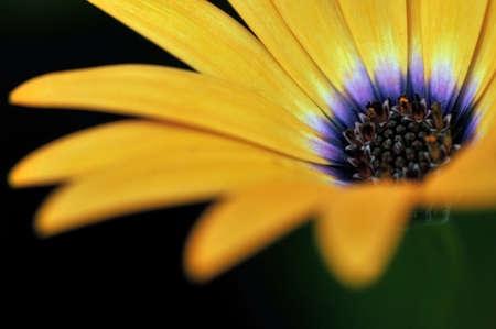 flower close up: Macro shot of Orange Flower