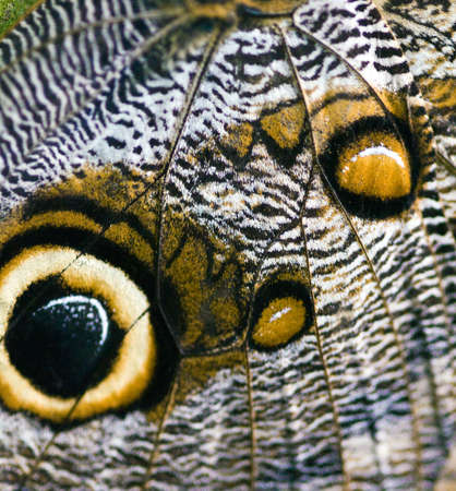 magnified: Macro of a butterfly wing