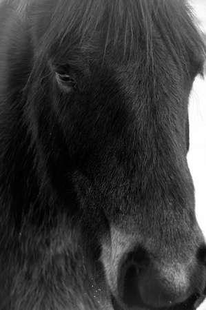 Black Horse photo