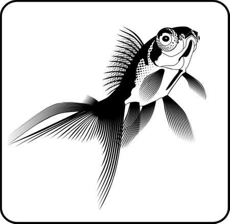 gold fish Stock Vector - 5221098
