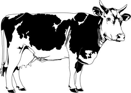 Koe Stock Illustratie