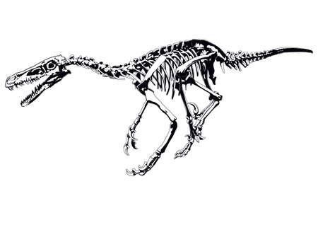 fossil: raptor esqueleto de dinosaurio