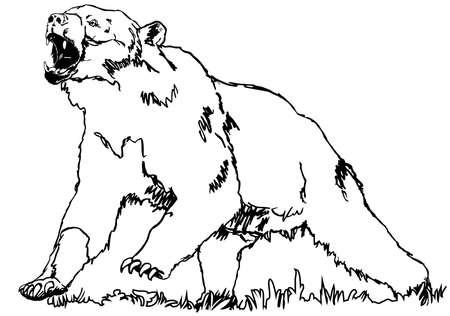 oso negro: oso pardo