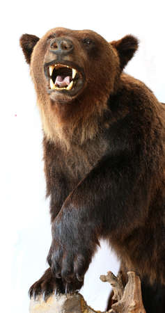 Bear trophy Stock Photo