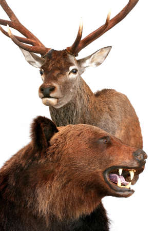 bear and deer Stock Photo