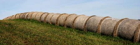 round bales of straws photo