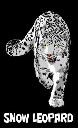 snow leopard Stock Vector - 17159610