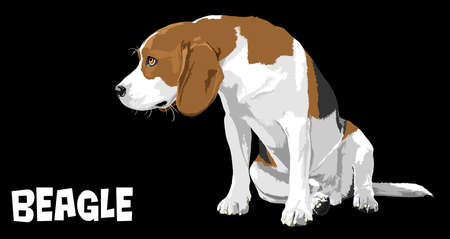 dog beagle Stock Vector - 17444054