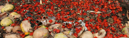 continued: tomatoes waste food Stock Photo