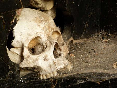 skull cobweb