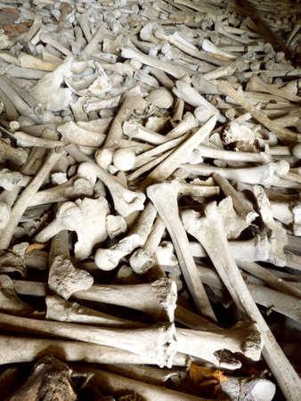 huesos humanos: huesos