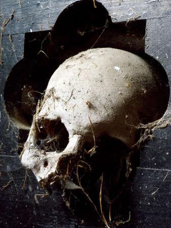 beenderige: schedel 2 Stockfoto