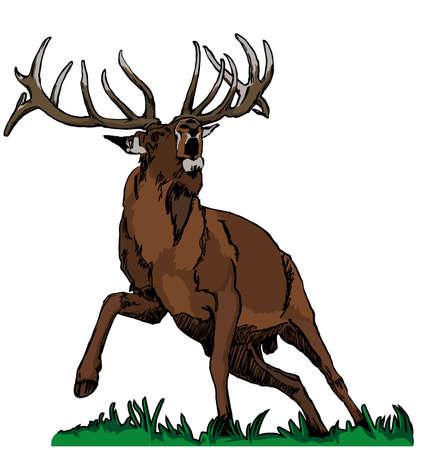 red deer: deer red colors