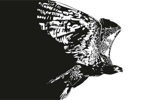 swoop: eagle flying Illustration