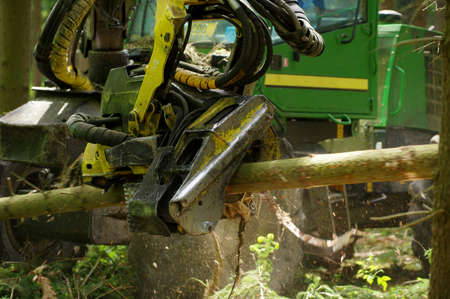 forestry industry: felling of the woods 4