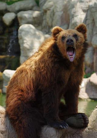 kamchatka: bear Kamchatka 5