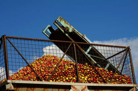 conveyer: apples conveyer belt Stock Photo