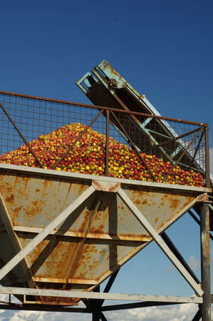conveyer: apples conveyer belt 3