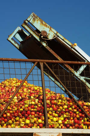 conveyer: apples conveyer belt 4 Stock Photo