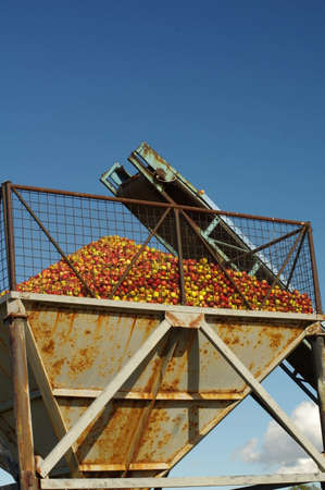 conveyer: apples conveyer belt 5