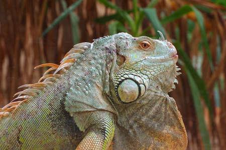 vivarium: iguana green profile 2