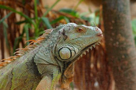 vivarium: iguana green profile
