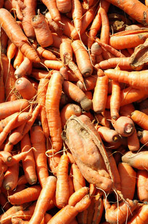 zanahoria: Tambi�n zanahorias agrietados apetito