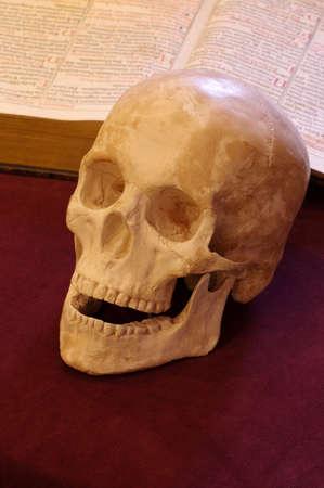 satanism: skull book still life Stock Photo