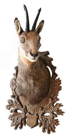 chamois head trophy Reklamní fotografie
