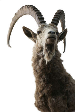 ibex trophy objects isolated Reklamní fotografie