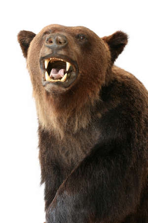 bear trophy objects isolated