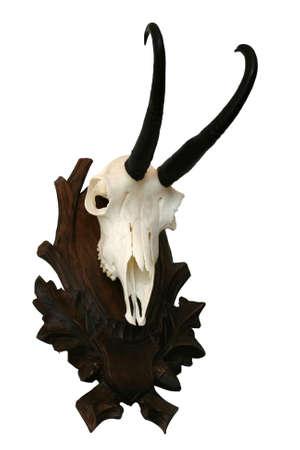chamois skull Reklamní fotografie
