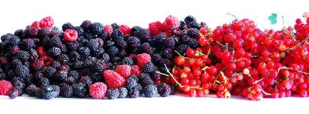 Berries of blackberries and currants