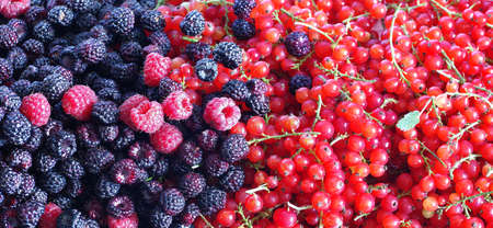 Berries of blackberries and currants. background
