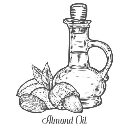 Almond nut oil bottle seed vector. Isolated on white background. Almond milk food ingredient. Engraved hand drawn almond illustration in retro vintage style. Organic Food, cosmetics, treatment component.