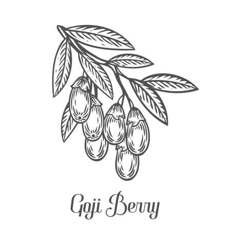 Goji berry, fruit, leaf, plant branch. Superfood organic asian berry. Hand drawn vector sketch engraved illustration. Black goji berry isolated on white background