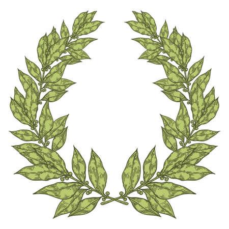 laurel leaf: Laurel Green Bay leaf Hand drawn vector illustration. Vintage decorative laurel wreath. Sketch design elements. Perfect for invitations, greeting cards, quotes, blogs, posters and more. Illustration