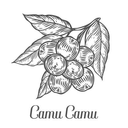 208 Camu Camu Stock Vector Illustration And Royalty Free Camu Camu ...